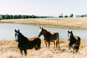 Horse Trio Photographic Art Print