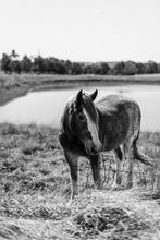 Horse in Black & White Photographic Art Print