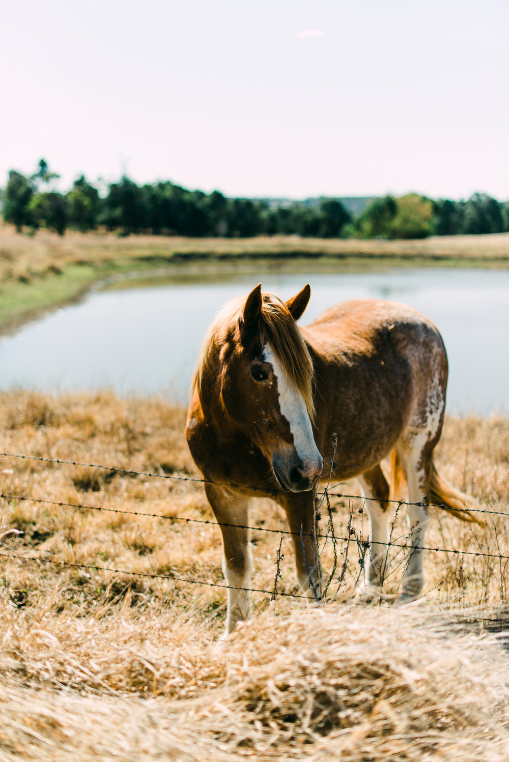 Horse Photographic Art Print