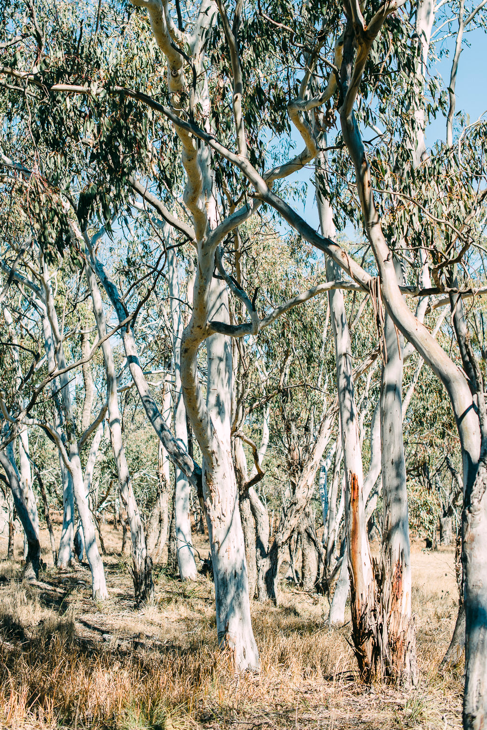 Australian Bush Photographic Art Print
