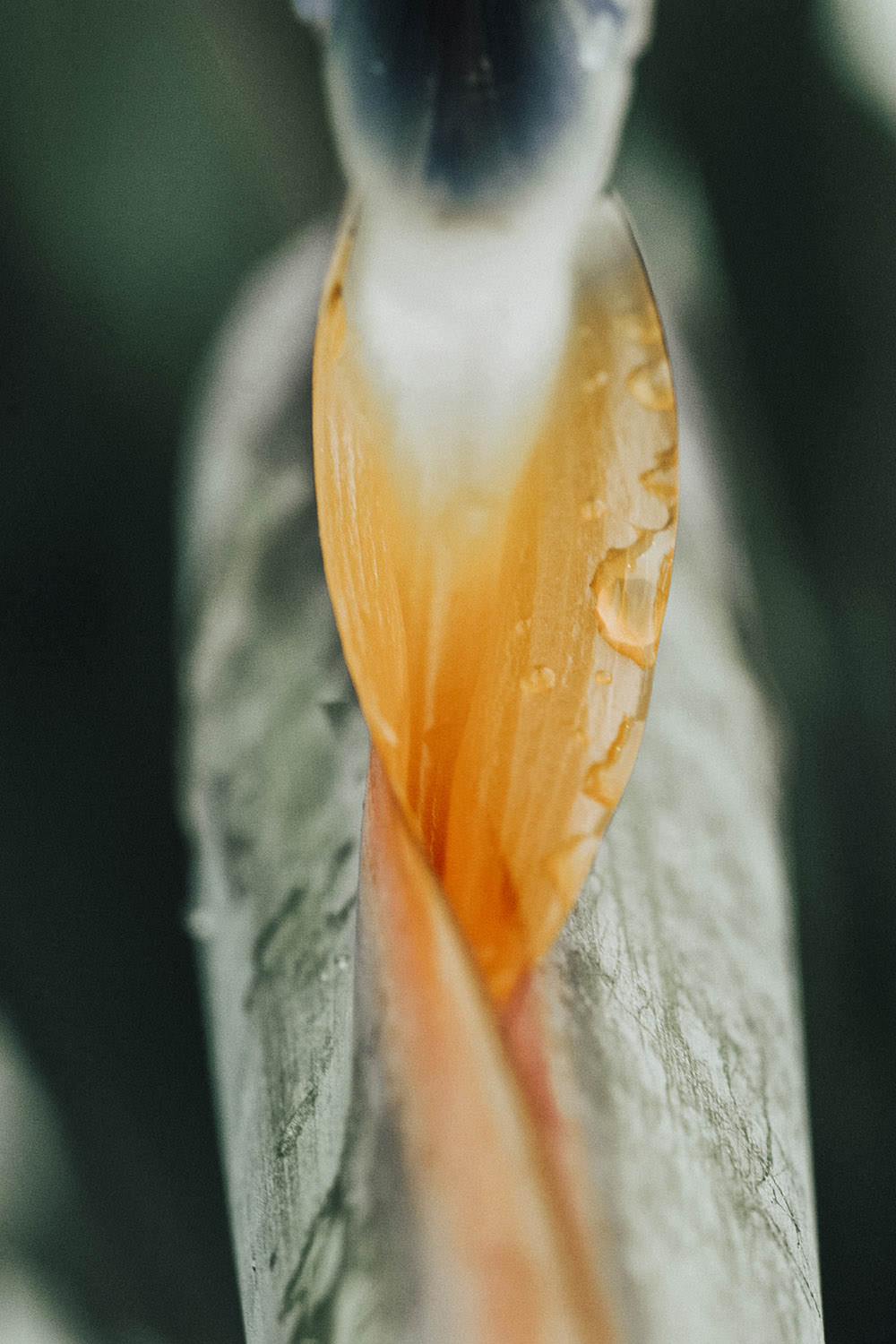 Bird of Paradise Photographic Art Print