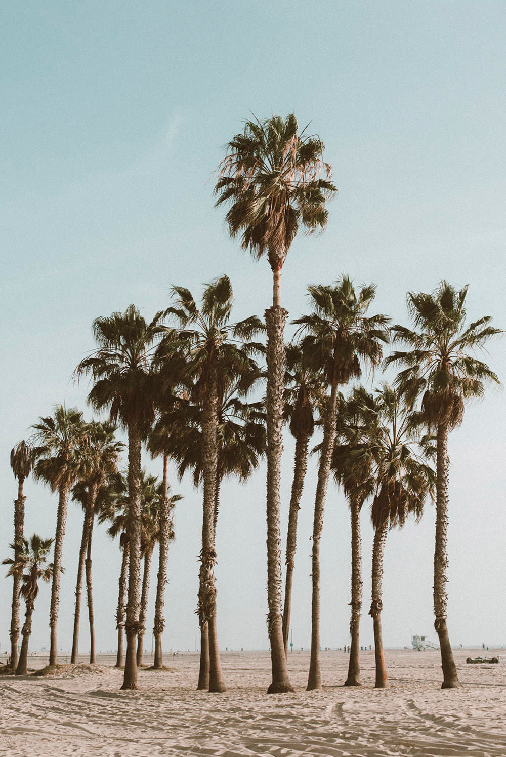Venice Beach Palm Trees Photographic Art Print