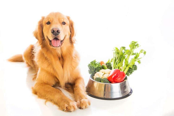 5 Benefits of Natural Organic Pet Food