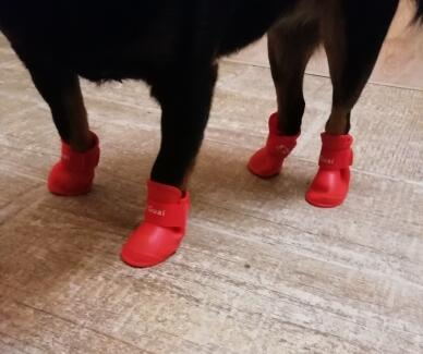 4pcs/lot S/M/L Rubber Portable Anti Slip Waterproof Rain Shoes Booties for Pet Dog Cat - doggiebox Australia
