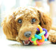 5cm Rainbow Pet Bell Ball Chew Toys for Teeth Training