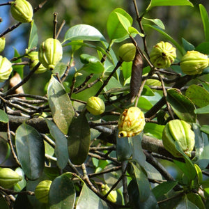 garcinia weight loss, anxiety