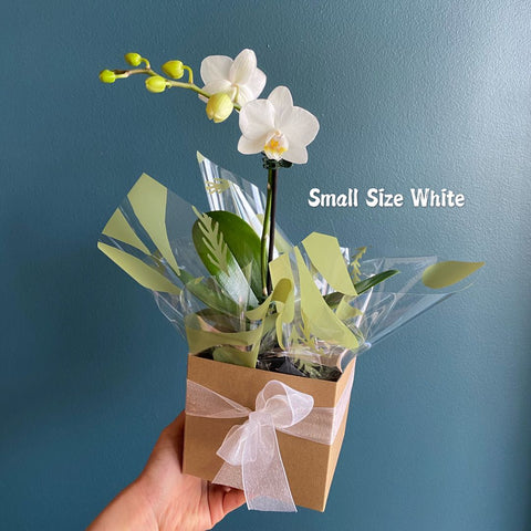 Plant # Orchid Small White