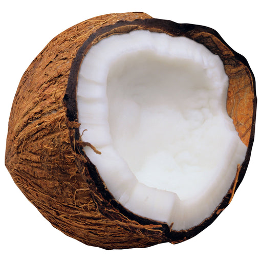 T10081 Accent Coconut
