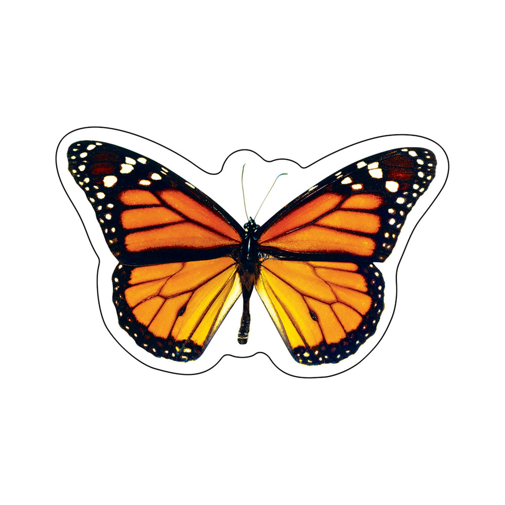 T10578 Accent Monarch