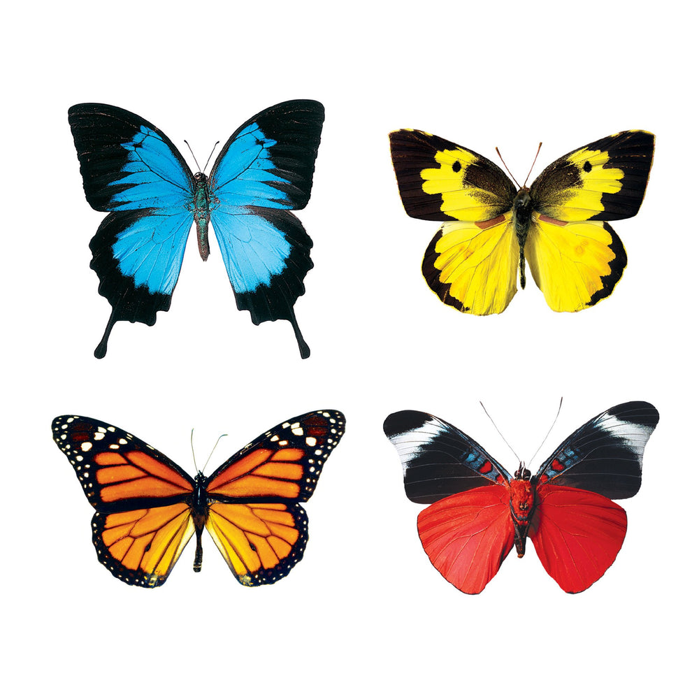 T10835 Accent Butterflies