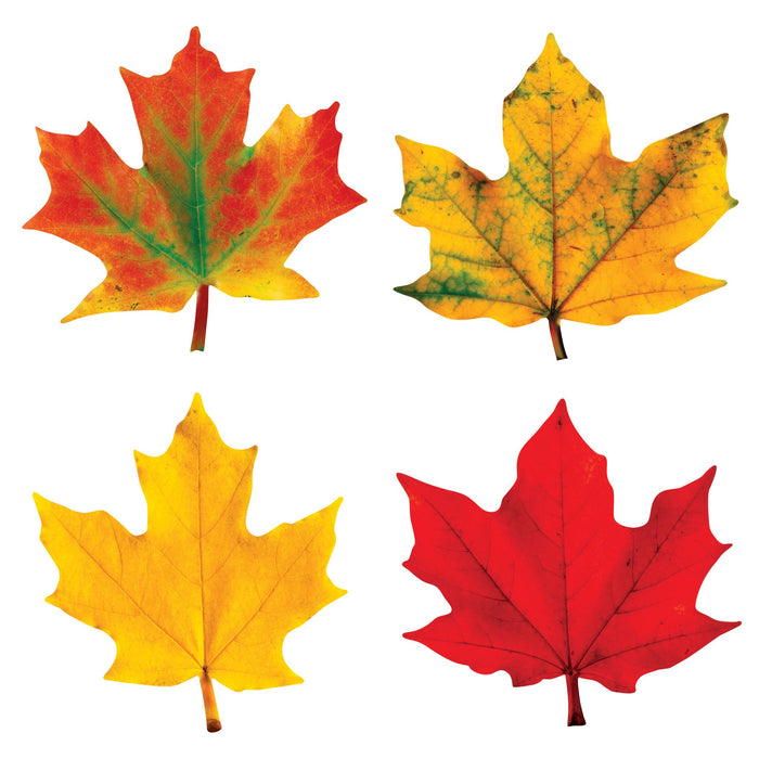 T10958 Accent Fall Maple Leaves