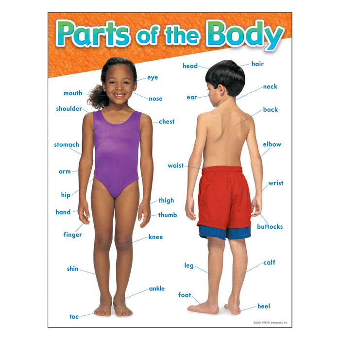 T38048 Learning Chart Parts of Body