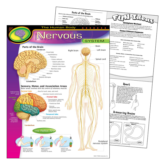 T38089 Learning Chart Human Body System Nervous