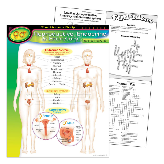 T38091 Learning Chart Human Body System Reproductive