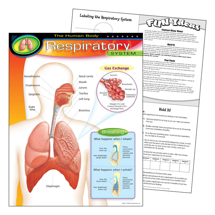T38094 Learning Chart Human Body System Respiratory