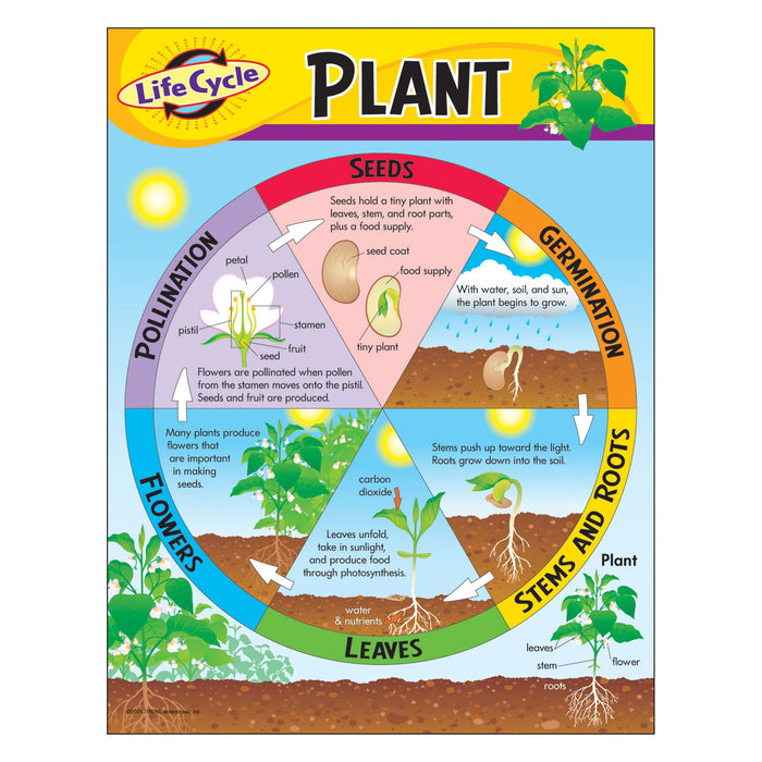 T38179 Learning Chart Life Cycle Plant