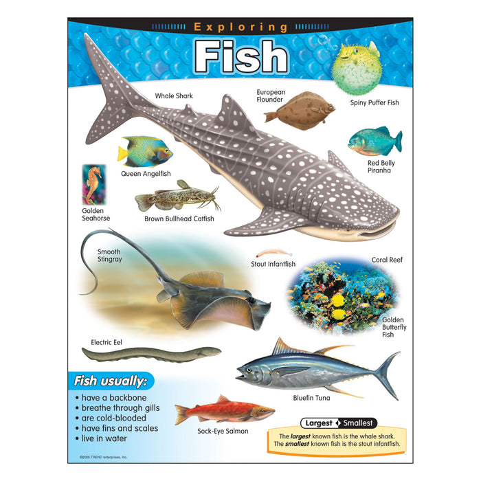T38183 Learning Chart Exploring Fish