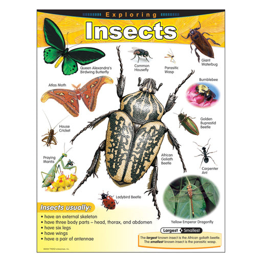T38184 Learning Chart Exploring Insects