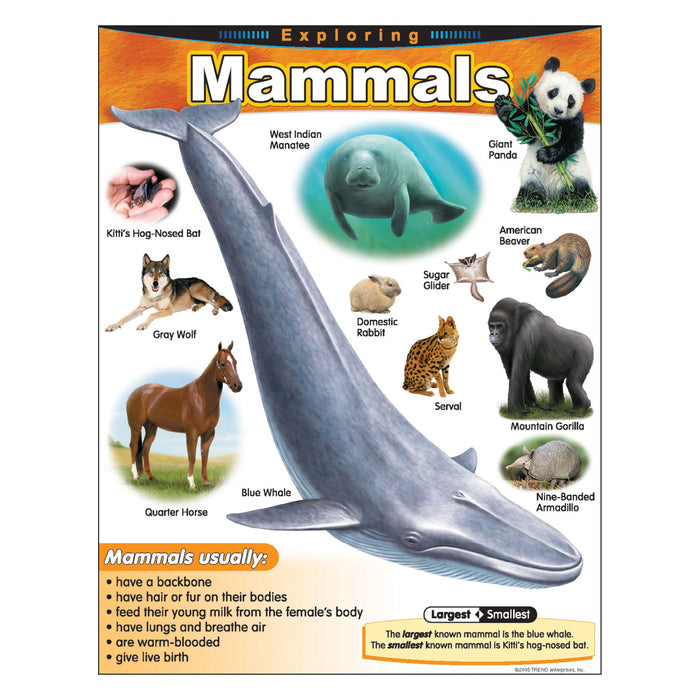 T38185 Learning Chart Exploring Mammals