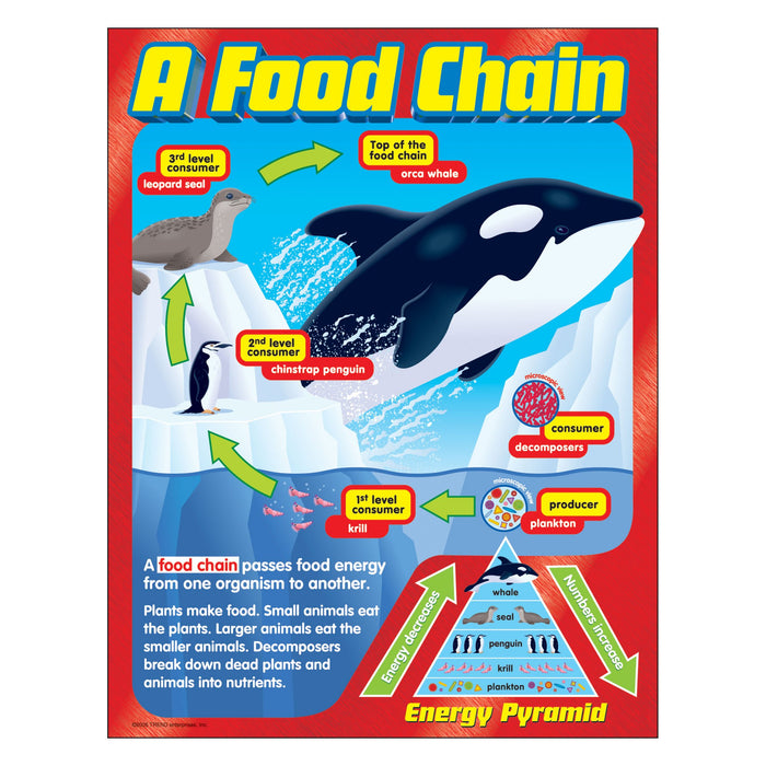 T38186 Learning Chart Food Chain