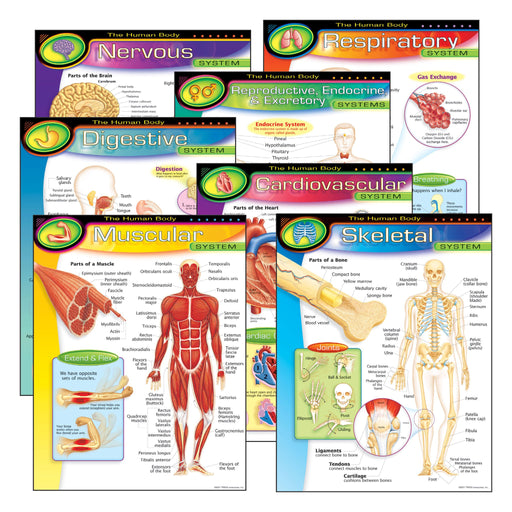 T38913 Learning Chart 7 Pack Human Body System