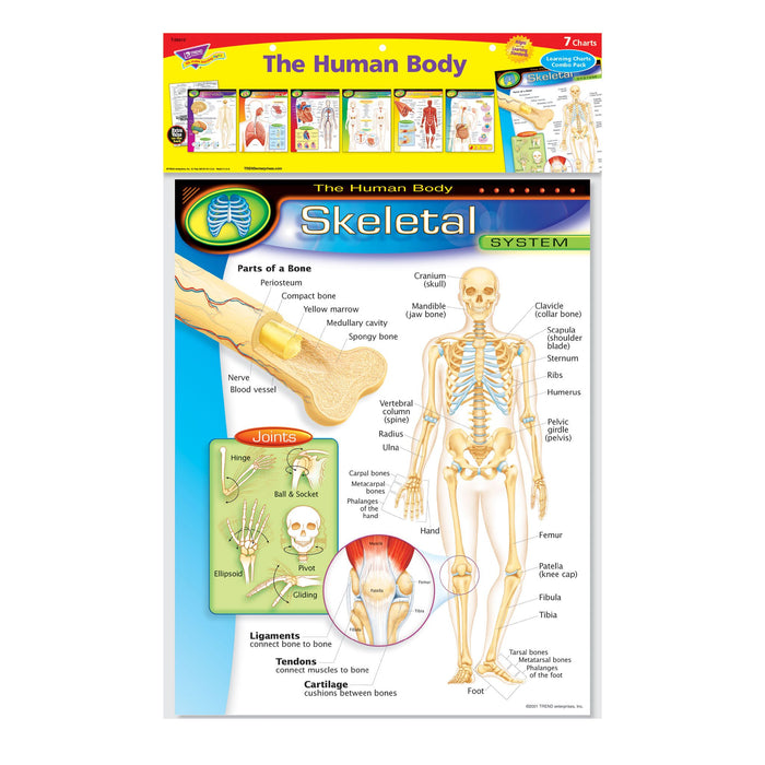 T38913 Learning Chart 7 Pack Human Body System Package