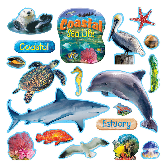 T8603 Bulletin Board Coastal Sea Life
