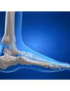 Understanding The Anatomy Of The Ankle