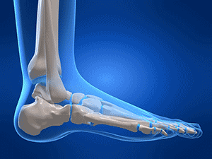 Image of the ankle joints