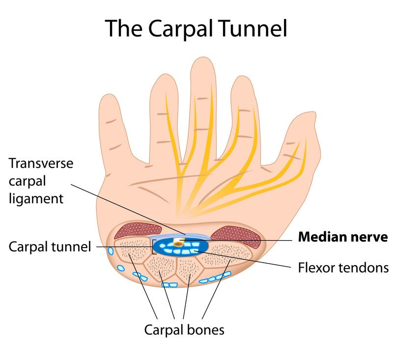 anatomy of the wrist and carpal tunnel