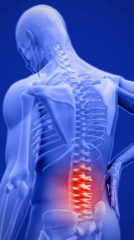 lower back (lumbar spine) highlighted in red