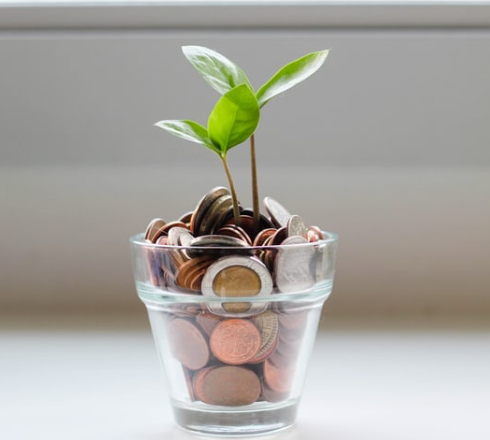 a plant sprouting from money depicting money growing on trees