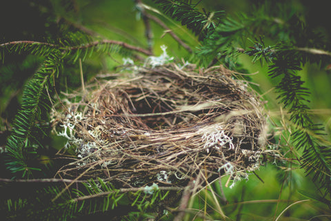 reinvent yourself and experience personal growth following divorce and empty nesting as depicted by an empty bird's nest here