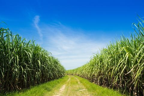 Cane Sugar Alcohol and the Environment | Fyve, Inc.