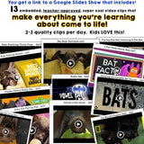BATS . 5 Animal Research Lessons w/ Video Clips: Science, Literacy, Writing, FUN