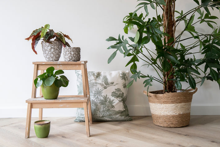 Indoor potten en basket