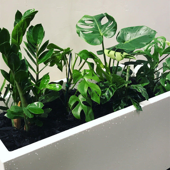 Need plants for your office?