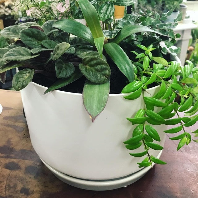 Wide Oslo Planter with Mini House Plants