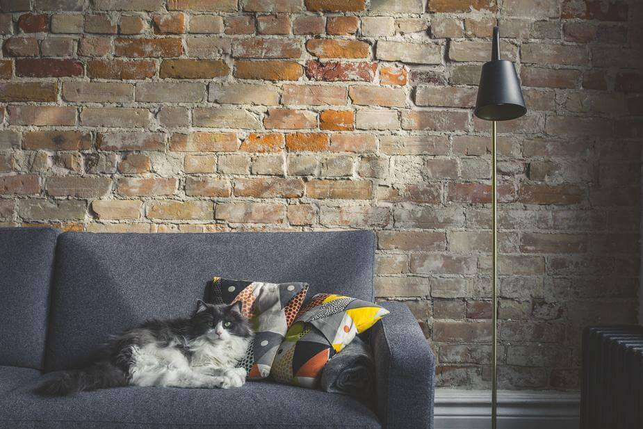 Long haired cat sitting on couch in front of brick wall