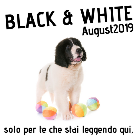 Cuccioli di landseer in vendita Promo Landseer Puppy Black and White