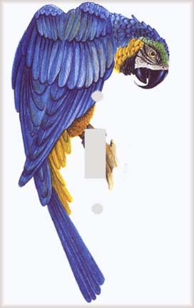 Parrot on the Branch Switch Plate Cover