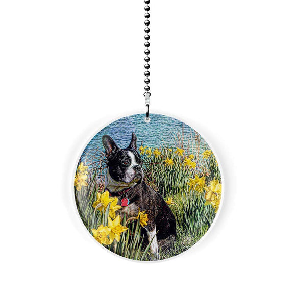 Boston Terrier in the Daffodils Fan Pull