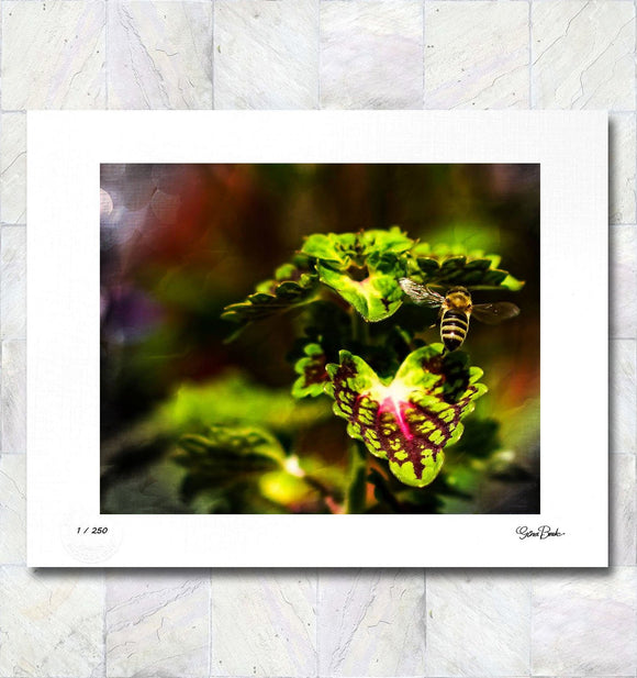 Flight of the Bee Limited Edition Signed Fine Art Print By Gina Brake