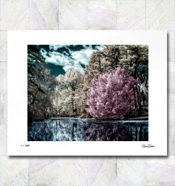 Lake Garden Limited Edition Fine Art Print By Gina Brake