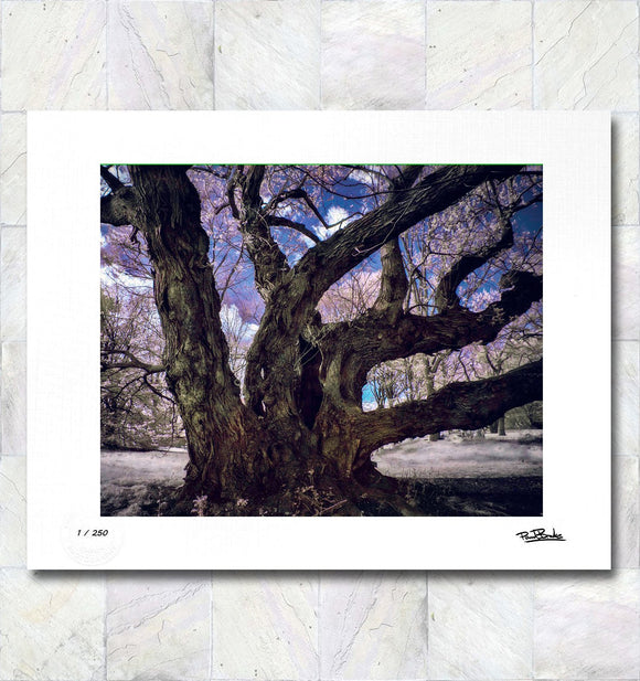 Fantasy Tree Limited Edition Fine Art Print By Paul Brake