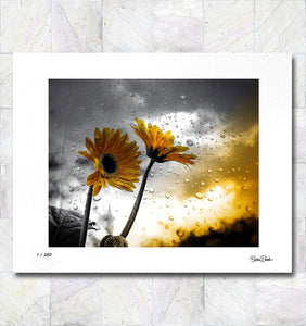 Sunflower Storm Limited Edition Signed Fine Art Print By Gina Brake