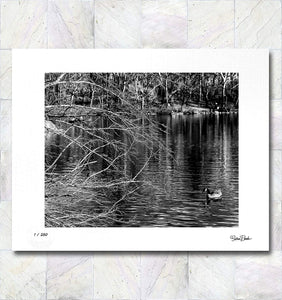 Duck on the River Limited Edition Signed Fine Art Print By Gina Brake