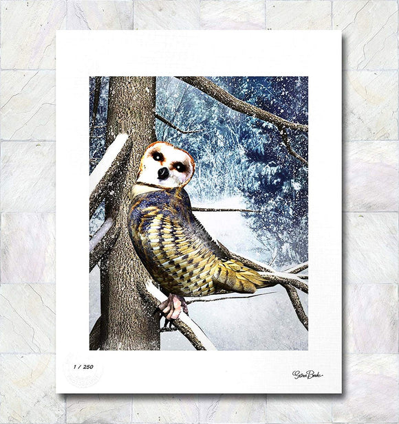 Barn Owl Limited Edition Signed Fine Art Print By Gina Brake
