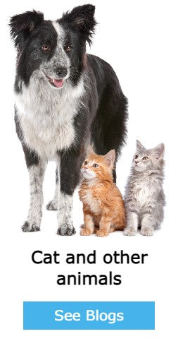 cat and other animals