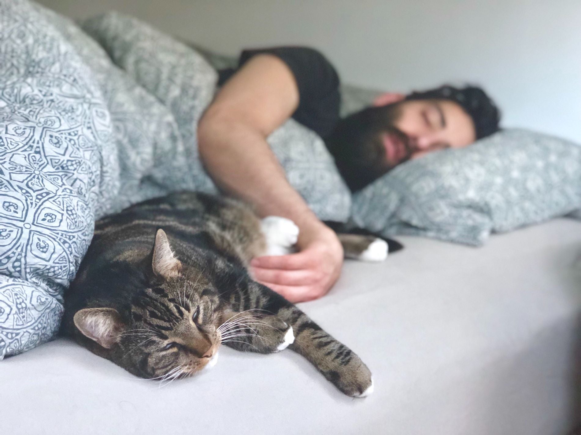 aman and a cat sleeping